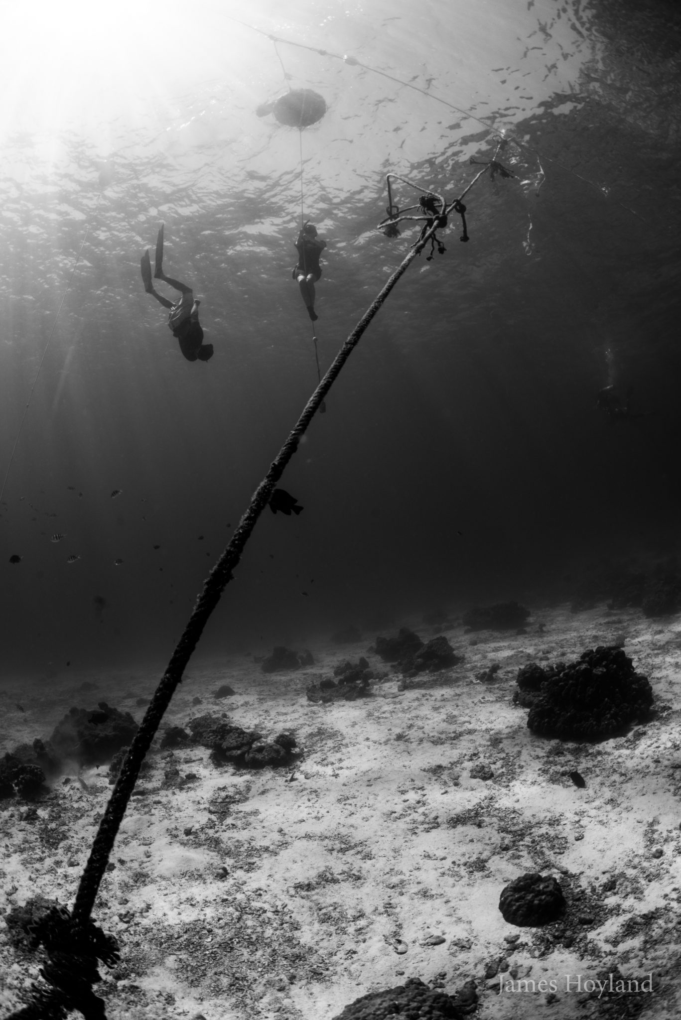 freediving (1)
